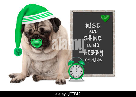getting up in early morning, grumpy pug puppy dog with sleeping cap, alarm clock and sign with text rise and shine - Stock Photo