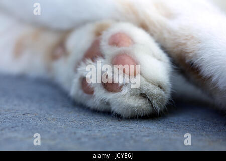 Katzenpfote - Stock Photo