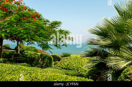 Royal Poinciana (Delonix regia) in full bloom in the garden of The Mount of Beatitudes, Kinnerot, Israel with view - Stock Photo