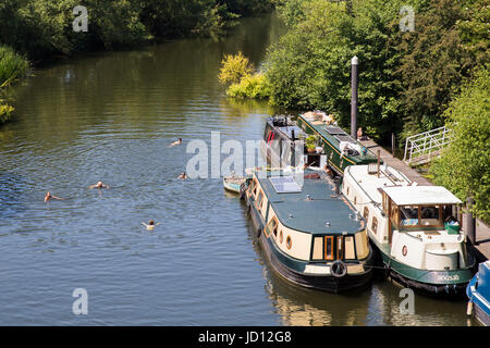 River Avon between Bristol and Bath, UK. 18th June, 2017. People swim near canal boats in the River Avon between - Stock Photo