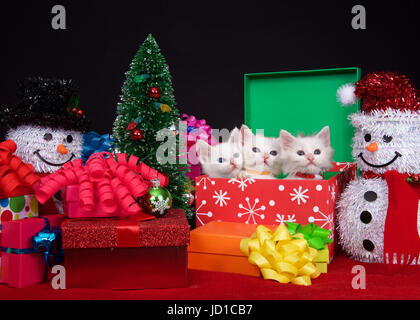 one kitten holding tree three fluffy white kittens in a holiday box next to a tiny christmas tree snowman - Tiny Christmas Tree