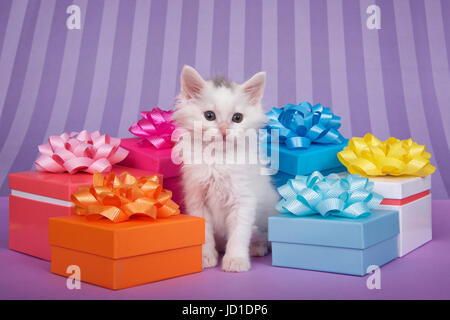 Small white kitten surrounded by bright colorful presents with bows on a solid purple table with light and dark - Stock Photo