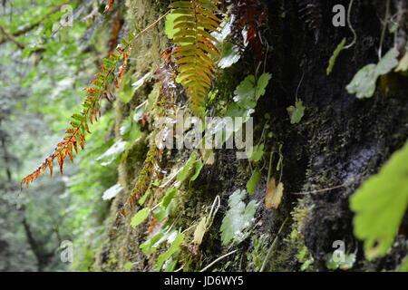 Plant Life - Stock Photo