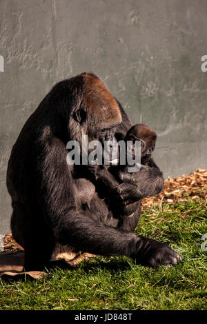 A Touching Moment between Mother and Baby in Nature - Stock Photo