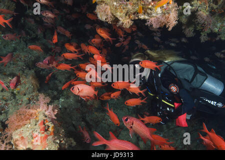 Female scuba diver look on school of fish Common Bigeye (Priacanthus hamrur) in the cave, Indian Ocean, Maldives - Stock Photo