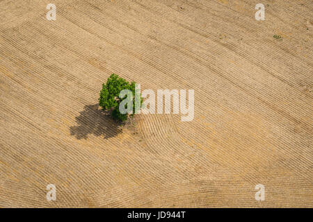 Aerial View Of Single Tree in Farm Field - Stock Photo