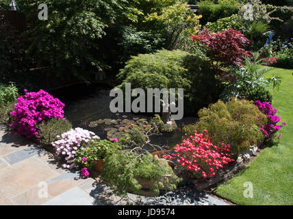 Patio plants around a pond - Stock Photo