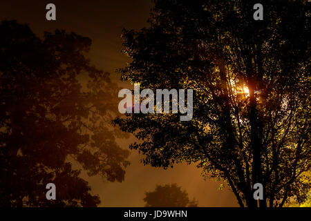 The street near the tree at night is shrouded in fog, lit by a lamp - Stock Photo