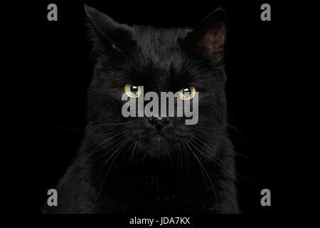 Black Cat on Dark Background - Stock Photo