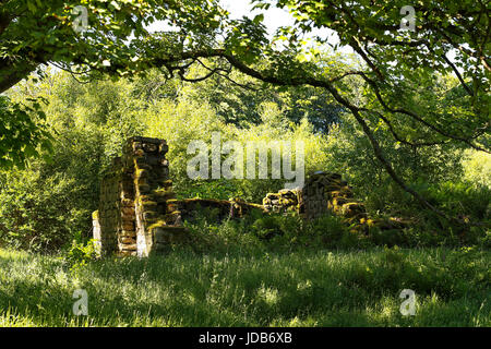 The abandoned ruins of a cottage of stone construction with nature reclaiming the site in the Yorkshire dales - Stock Photo