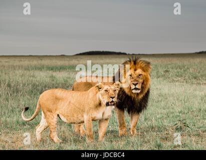 Beautiful African Wildlife - Stock Photo