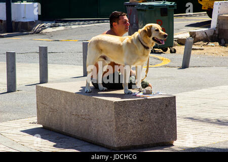 A local man and his Labrador dog siting on a marble plinth in bright sunshine the main street of Playa Las Amrericas - Stock Photo