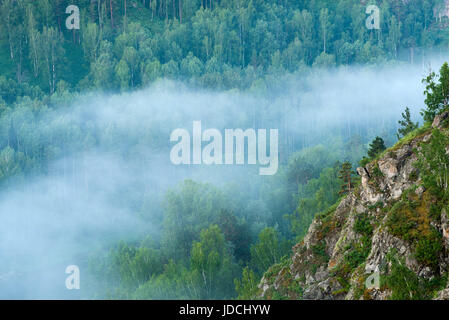 Ecological place Berdsky rocks . Early foggy morning. Pine trees in the fog. Russia, Siberia, Novosibirsk region, - Stock Photo
