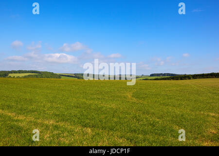 a scenic grazing meadow in the yorkshire wolds under a blue sky in summer with patchwork fields and woodland - Stock Photo