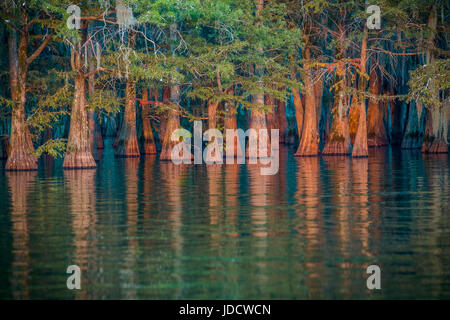 Golden light of sunset in a cypress swamp in Louisiana - Stock Photo