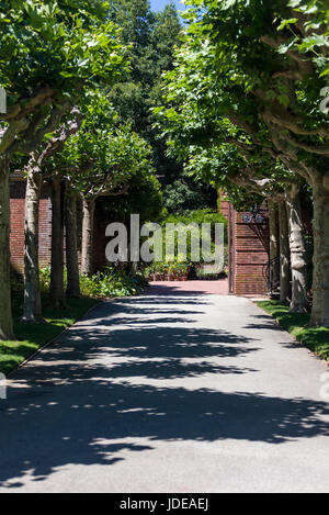 Path In Garden Near Pond With Blooming Dogwood Tree Hughes Water Stock Photo Royalty Free