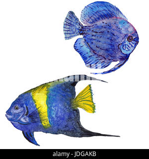 Watercolor aquatic underwater colorful tropical fish set. Red sea and exotic fishes inside. Aquarelle elements for - Stock Photo