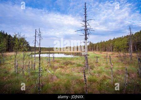 Scenic landscape from mire at summer morning in National Park, Liesjärvi, Finland. - Stock Photo