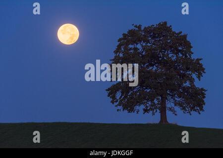 Full moon in the half-shade of the earth beside a tree, Vollmond im Halbschatten der Erde neben einem Baum - Stock Photo