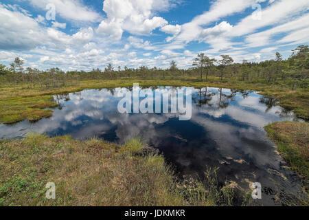 Hochmoor in Schweden, Hill Moor - Stock Photo