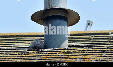 Brighton, UK. 21st June, 2017. Herring Gull chicks try to find some shade to help keep cool on Brighton rooftops - Stock Photo