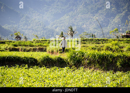 Rice terraces in northern Bali near Mount Agung with workers - Stock Photo