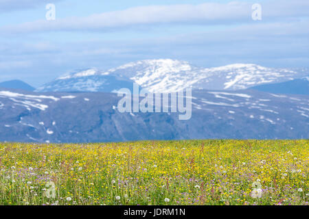 Wildflowers, buttercups on I hill this side the mountain. View of the ridges in the background. Spring, summer. - Stock Photo