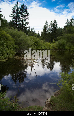 A small pond reflect blue sky and clouds amongst green trees of a forest on an early June day - Stock Photo
