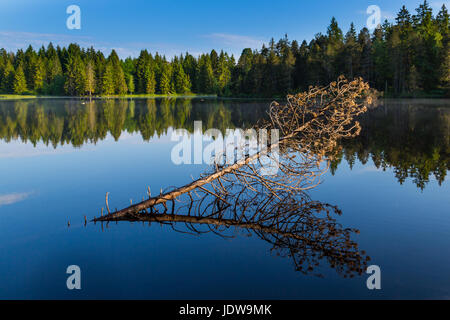 fallen tree, forest and blue sky reflected on water surface of lake etang de la gruere, switzerland - Stock Photo