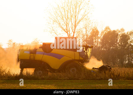 Harvester in backlight surrounded by dust works in a field at sunset - Stock Photo