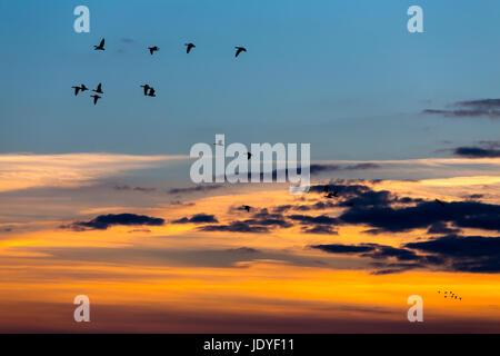 Birds flying over the sea - sunset shot - Stock Photo