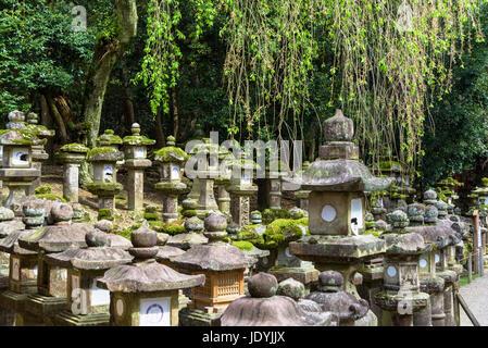 kasuga-taisha stone lanterns - Stock Photo