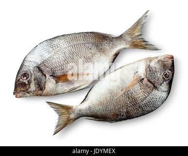 Two raw fresh dorados - Stock Photo