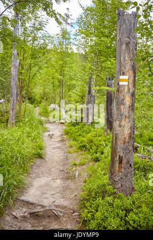 Hiking trail marking painted on tree in High Tatra Mountains, Slovakia. - Stock Photo