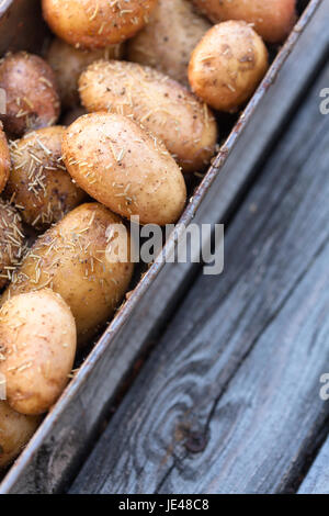 New potatoes with garlic prepared for roast. - Stock Photo