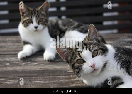 Two Kittens on wooden table - Stock Photo
