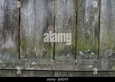 The texture of the old fence of wooden planks covered with moss - Stock Photo