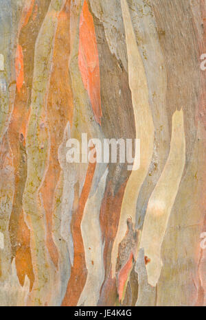 wood brown - Stock Photo