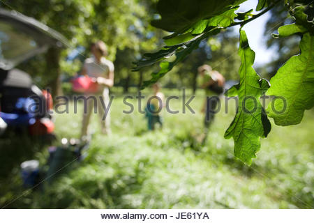 Family unloading parked car on camping trip in woodland clearing, focus on leaves in foreground - Stock Photo