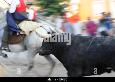 Traditional running of wild bulls by the 'campinos', during the Barrete Verde (Green Cap) festivities. Alcochete, - Stock Photo