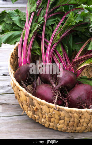 Closeup-Fresh Beets from the garden with rich red colors set off by the green leaves - healthy farm to table food. - Stock Photo