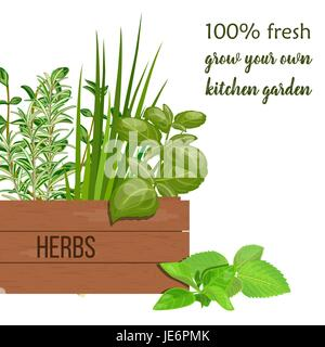 Wooden crate of farm fresh cooking herbs in wooden box. Greenery basil, rosemary, chives, thyme, oregano with text. - Stock Photo