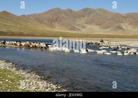 Mongolia, Central Asia, Ovorkhangai province, historical Orkhon valley, UNESCO world heritage, Orkhon flux, flock - Stock Photo
