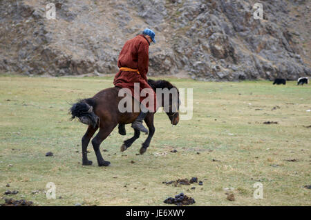 Mongolia, Central Asia, Ovorkhangai province, historical Orkhon valley, UNESCO world heritage, nomad, bleed, horse - Stock Photo