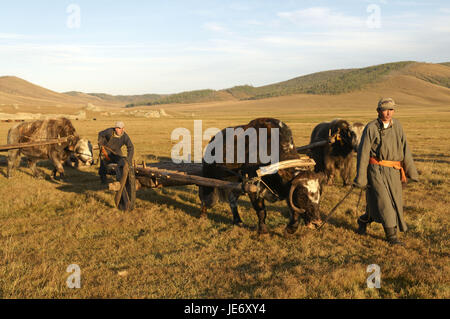 Mongolia, Central Asia, Arkhangai province, nomad, yaks, carriages, - Stock Photo