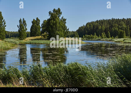 A small pond around which trees grow. The sky is clear, without clouds. Summer day, noon. Nature of Russia. Pskov - Stock Photo
