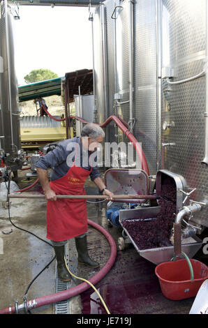 Italy, Tuscany, region Chianti, Greve in Chianti, winegrower in the wine production, - Stock Photo