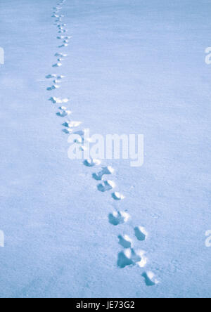 Animal tracks in the snow, - Stock Photo