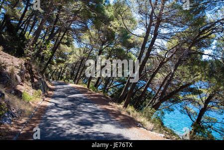 Leaning Aleppo pines shading the track around Jezero lake on the island of Mljet in Croatia - Stock Photo