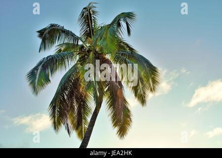 Green palms and Blue Skies - Stock Photo